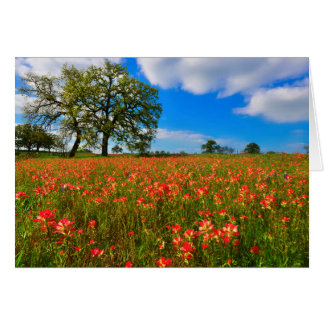 Indian Paintbrush Scene Card