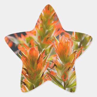 Indian Paintbrush Star Sticker