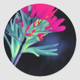 Indian Paintbrush Stickers