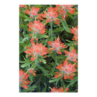 Indian paintbrush wildflowers in the Many Photo