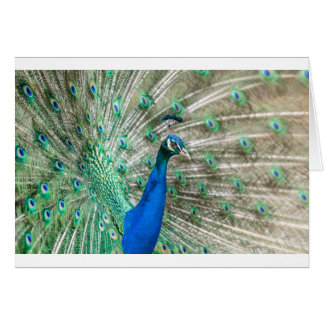 Indian Peacock Card