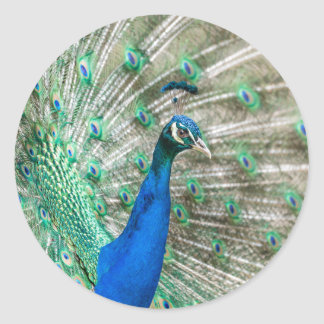 Indian Peacock Classic Round Sticker