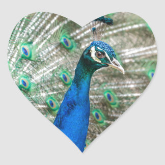 Indian Peacock Heart Sticker