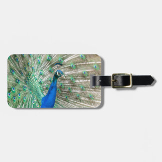 Indian Peacock Luggage Tag