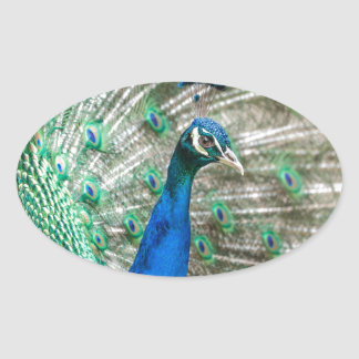 Indian Peacock Oval Sticker