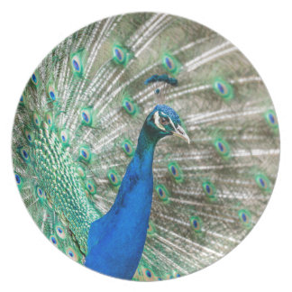 Indian Peacock Party Plate