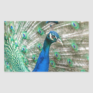 Indian Peacock Rectangular Sticker