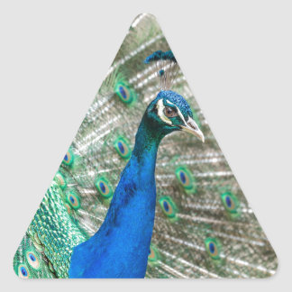 Indian Peacock Triangle Sticker