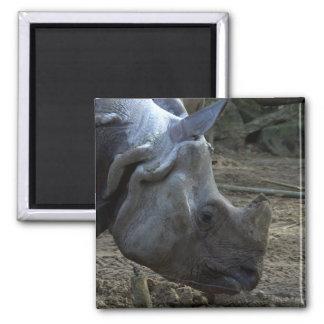 Indian Rhinoceros Square Magnet