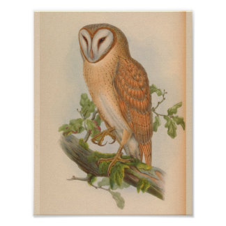 Indian Screech Owl Brown Vintage Bird Art Print