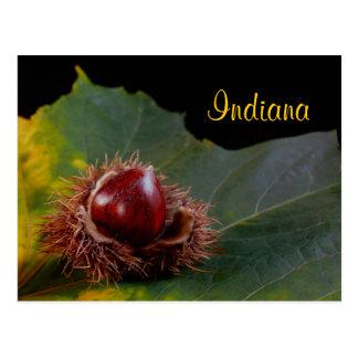 Indiana, Autumn Leaf With Nut Postcard