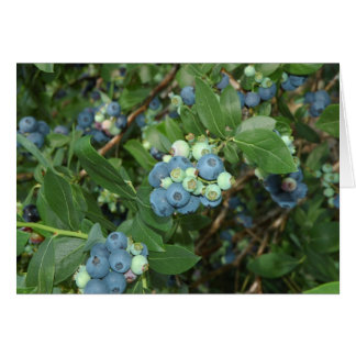Indiana Blueberries Card