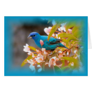 Indigo Bunting Blue Card