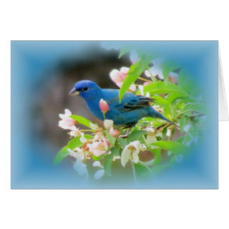 Indigo Bunting Blues Card