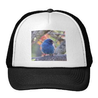 Indigo Bunting Cap