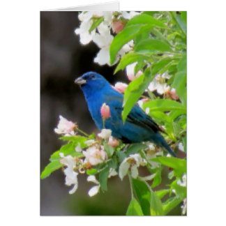 Indigo Bunting with Blossoms Card