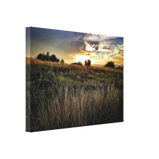 Indigo Hills Park, Highland Ranch, Co Canvas Print
