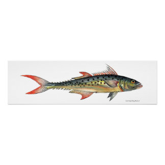 Indo-Pacific King Mackerel Fish Poster