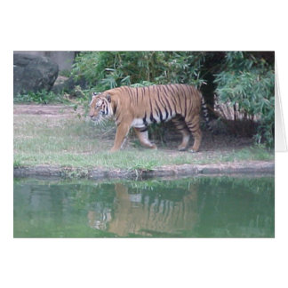Indochinese Tiger Card