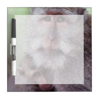 Indonesia, Bali, Ubud, Long-tailed Macaque 1 Dry Erase Whiteboards