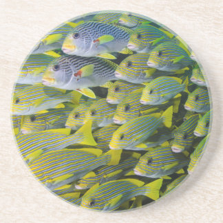 Indonesia. Schooling Fish Beverage Coasters