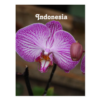 Indonesian Orchids Postcard
