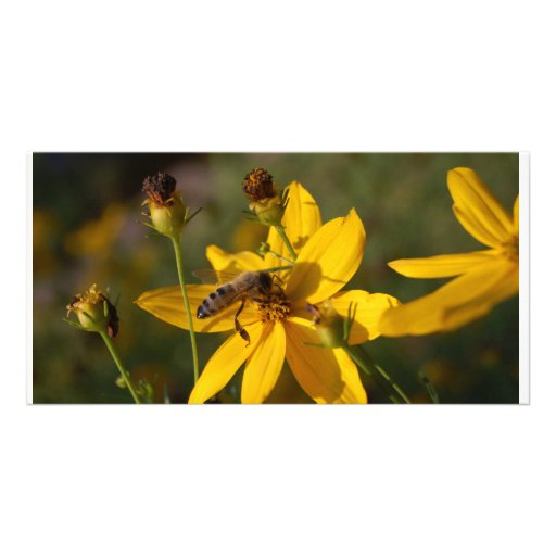 Industrious Bienchen Customized Photo Card