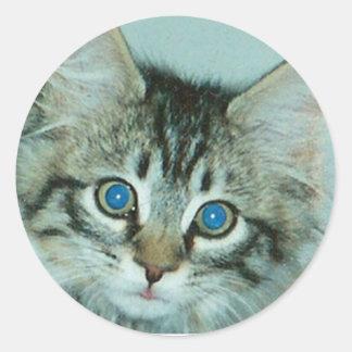 Indy Kitten Sticker