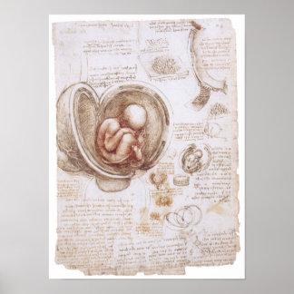 Infant in the Womb, Leonardo da Vinci Poster