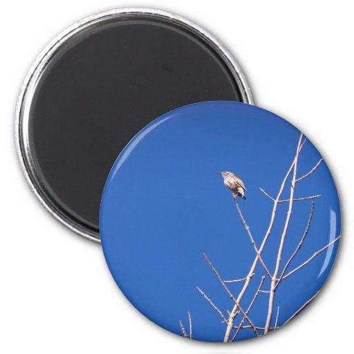 Infant Wood Thrush Magnet