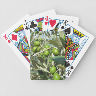 Infested olive tree by olive fruit fly bicycle playing cards