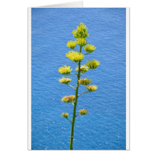 Inflorescence of Agave plant. Card