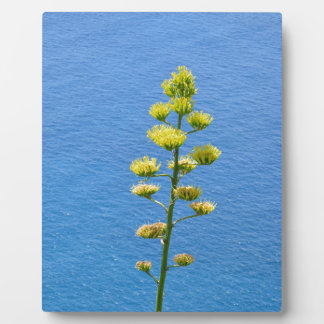 Inflorescence of an Agave plant Display Plaques