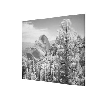 Infrared photo in East side of Yosemite National 2 Stretched Canvas Prints