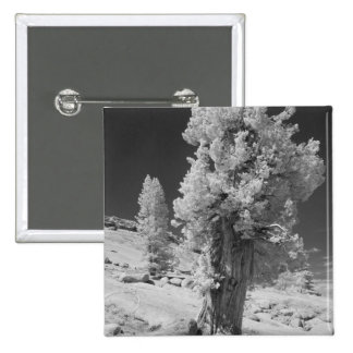 Infrared photo in East side of Yosemite National Pinback Button
