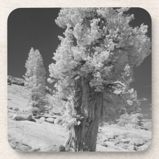 Infrared photo in East side of Yosemite National Drink Coaster