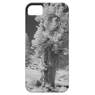 Infrared photo in East side of Yosemite National iPhone 5 Covers