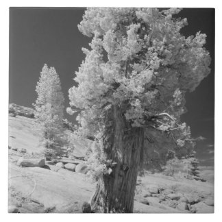 Infrared photo in East side of Yosemite National Large Square Tile