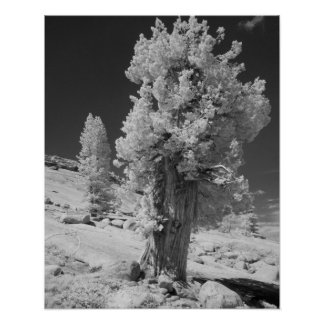 Infrared photo in East side of Yosemite National Poster
