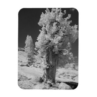 Infrared photo in East side of Yosemite National Rectangular Photo Magnet