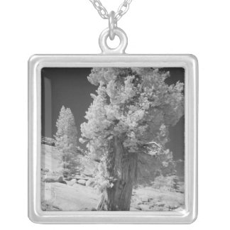 Infrared photo in East side of Yosemite National Square Pendant Necklace