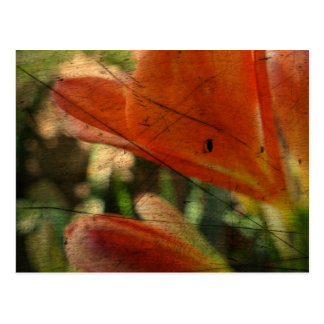 Inka Lily Abstract Post Cards