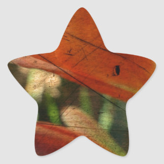 Inka Lily Abstract Star Stickers