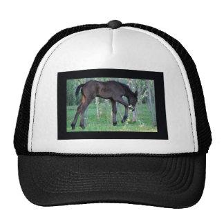 Inquisitive little foal trucker hat