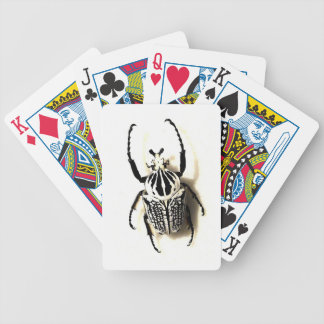 Insect card deck
