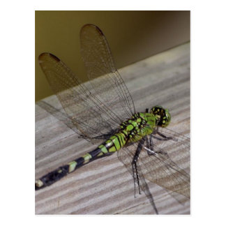 Insect Dragonfly Postcard