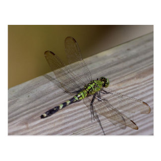 Insect Dragonfly Post Card