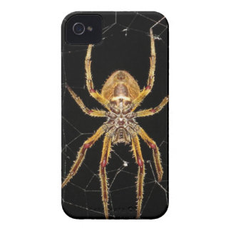 Insect Macro Spider Colombia Case-Mate iPhone 4 Case