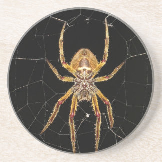 Insect Macro Spider Colombia Coaster