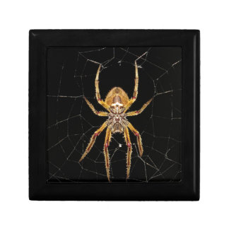 Insect Macro Spider Colombia Gift Box